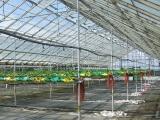 glasshouse_crops_3