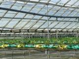 glasshouse_crops_4