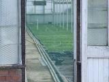 glasshouse_crops_5