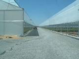 greenhouse_12