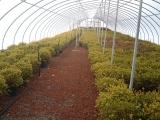 greenhouse_8