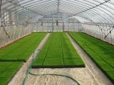 sod_greenhouse_interior