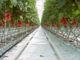 tomato_p5260299b
