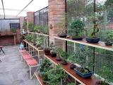 bonsai_nursery_andreasd