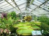 botanischer_garten_bs-seerosen