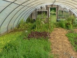 greenhouse-7