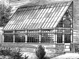 greenhouse_draft_-_godwin_adams_-_03