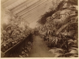 tropical_section_of_a_greenhouse