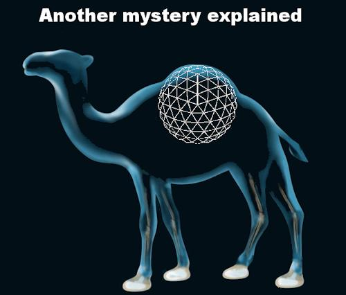 secret_camel_revealed