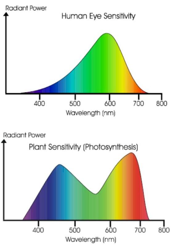 lighting_control_greenhouse_2